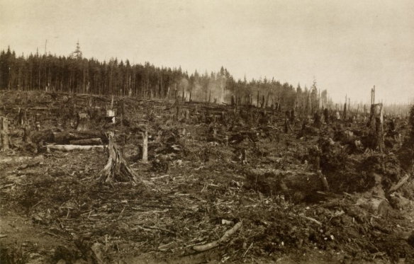 """1885 view of cleared forest in Granville, now Vancouver, BC. Copy of photograph titled """"clearing for a new city (Vancouver) at Granville.' . From """"Wanderings with a Camera"""" by Erskine Beveridge. Photo: Erskine Beveridge, RCAHMS, DP050372."""