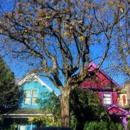 bright heritage houses